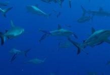 Überleben im Haifischbecken der Kreativwirtschaft